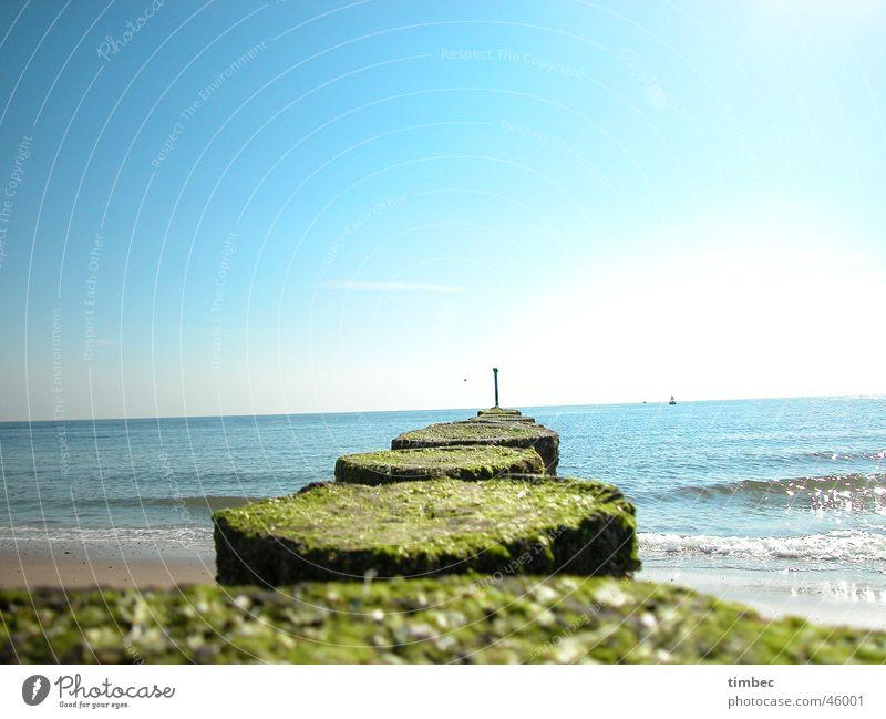 Weit hinaus Strand Meer Buhne Romantik harmonisch Erholung Ferien & Urlaub & Reisen Mann Spielen toben Holz Algen Wellen Gezeiten Sand Wasser Himmel blau Freude