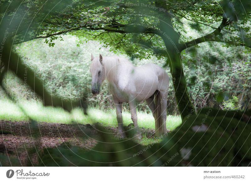 Beobachtet grün weiß Tier Wald Wildtier ästhetisch Pferd
