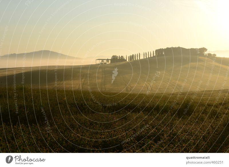 Junimorgen im Val D'Orcia Natur Ferien & Urlaub & Reisen Sommer Farbe Erholung ruhig Landschaft Ferne gelb Horizont Stimmung braun Feld gold Idylle Nebel