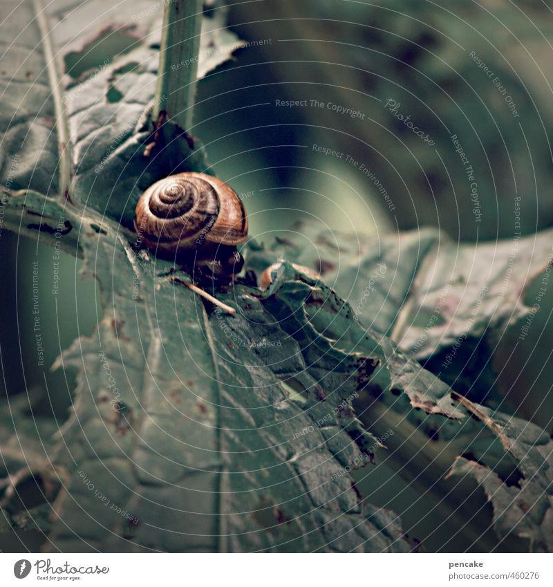 warteschleife Natur grün Pflanze Blatt Tier Wald Herbst Häusliches Leben warten schlafen Zeichen Schnecke Blattgrün schaukeln Schneckenhaus besetzen