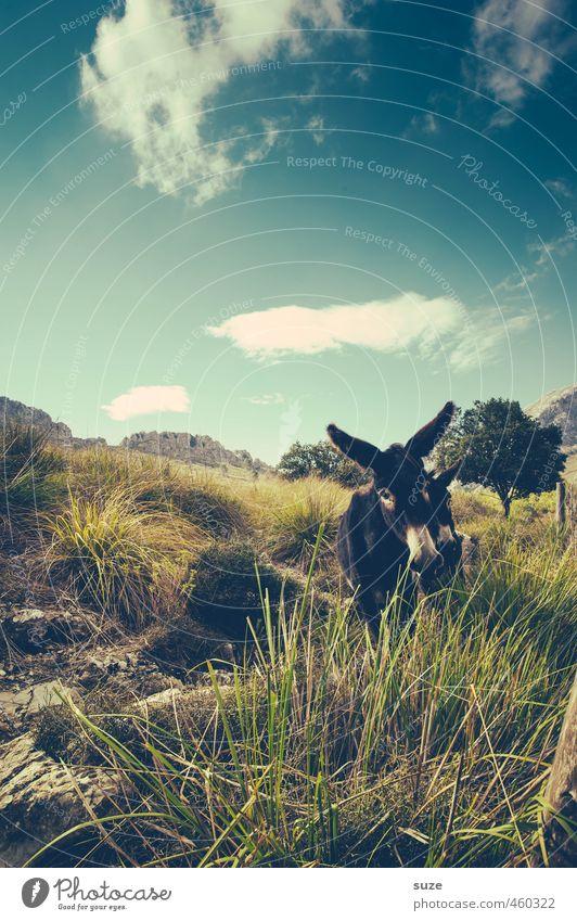 Bitte, bitte. Himmel Natur Ferien & Urlaub & Reisen Sommer Baum Landschaft Wolken Tier Umwelt Wärme Wiese Felsen Freizeit & Hobby Tierpaar Urelemente niedlich