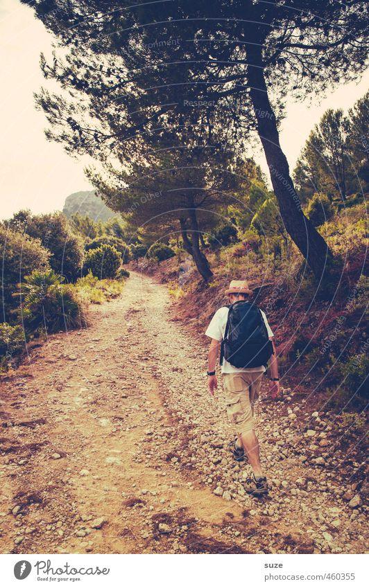 Wandertag Mensch Natur Ferien & Urlaub & Reisen Mann Sommer Baum Landschaft Erwachsene Umwelt Reisefotografie Wege & Pfade Freizeit & Hobby maskulin Tourismus