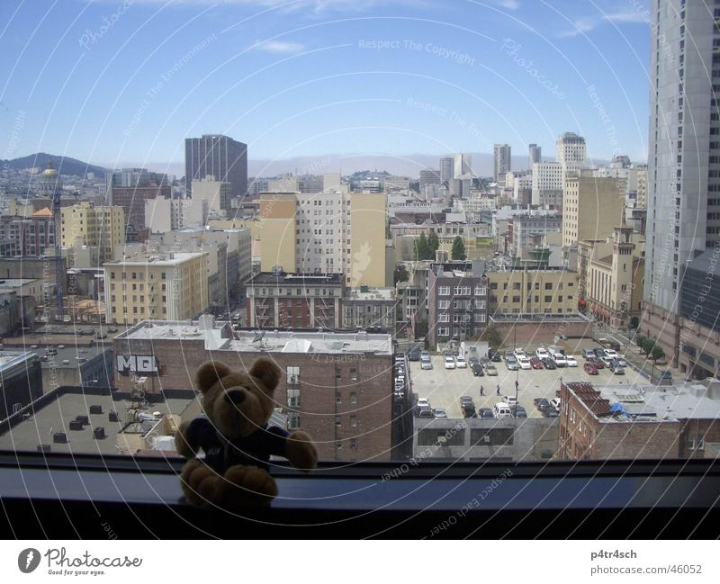 Bär auf Reisen Himmel Stadt Fenster Hochhaus Aussicht Bär Stofftiere San Francisco