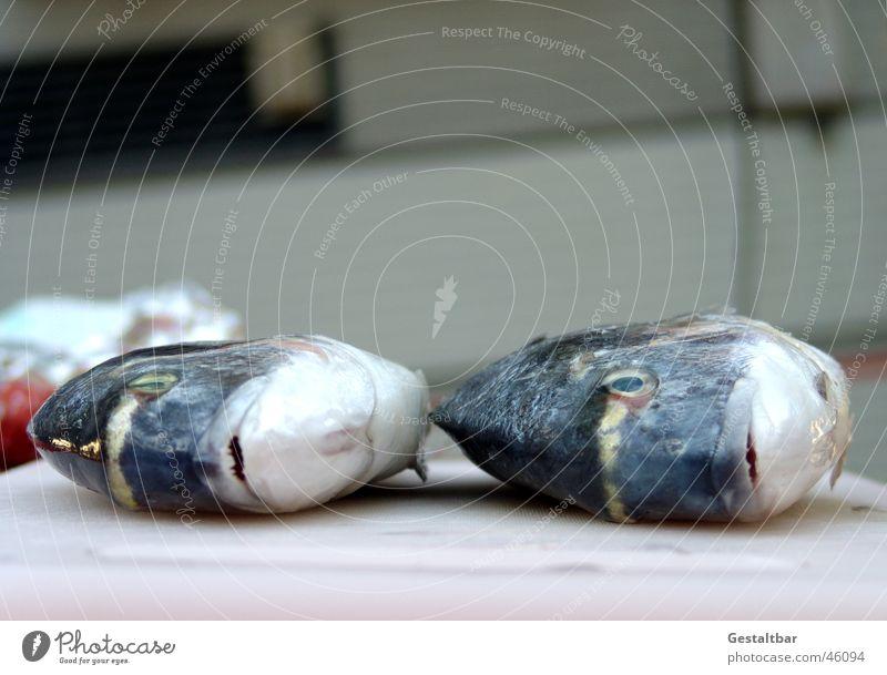 due orate due Orata Küche frisch fangen gestaltbar Ernährung Fisch mediteran Mittelmeer Holzbrett silber Scheune Maul Fischauge Angeln fangfrisch