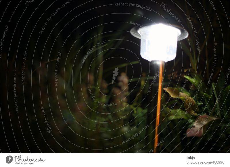 trash 2013 Solarbatterie Technik & Technologie Energiewirtschaft Sonnenenergie Natur Herbst Blatt leuchten dunkel hell Lichterscheinung Lichtschein Farbfoto