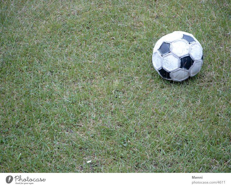WM 2002 Sport Fußball Rasen