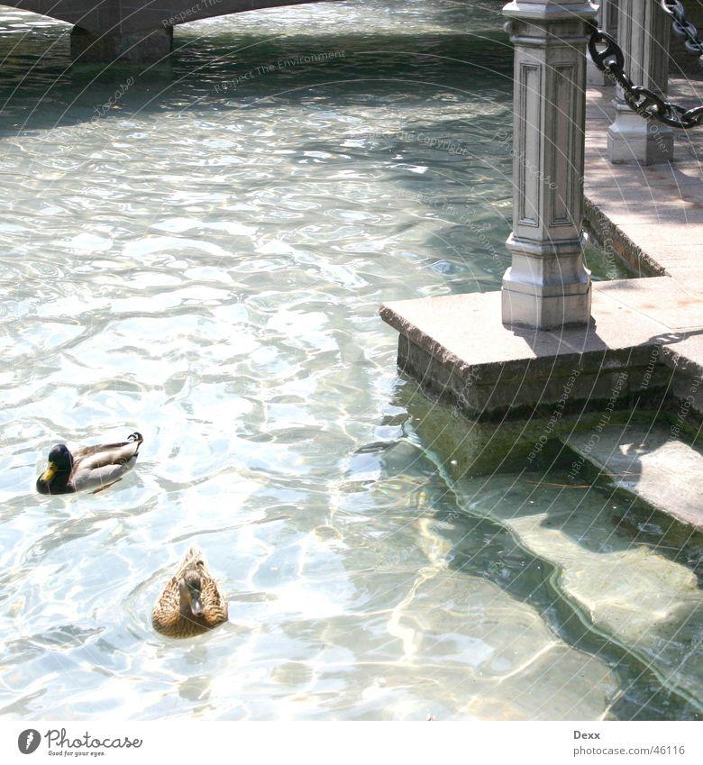 Enten im Park Wasser Brücke Teich