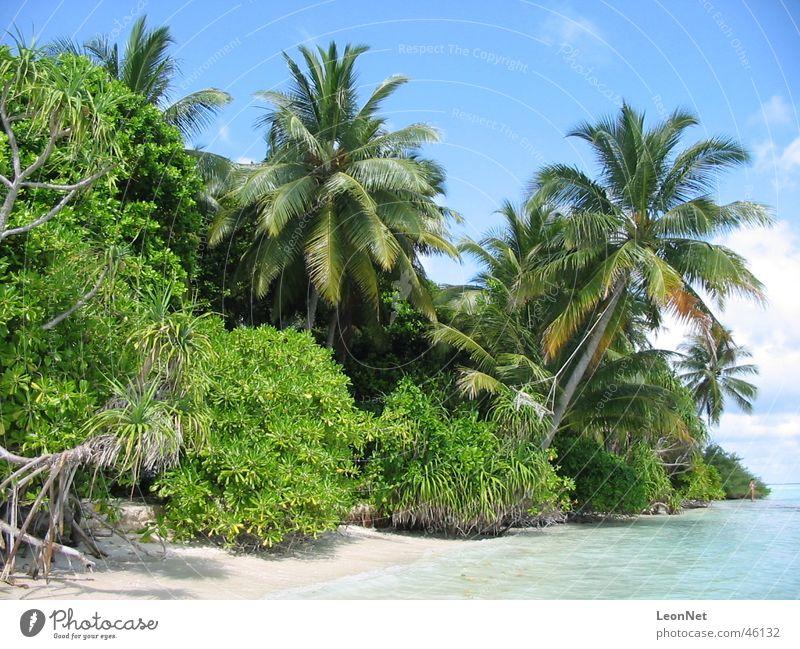 Strand Vilamendhoo Palme Malediven Insel