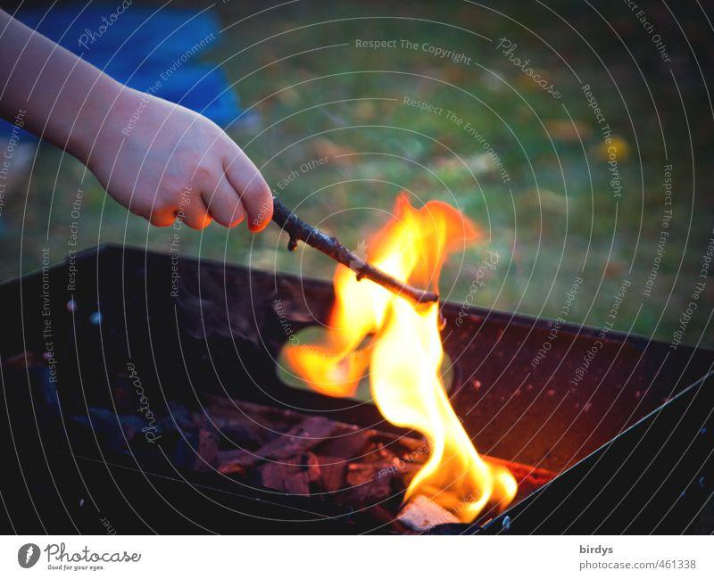 Nebenschauplatz Mensch Kind Hand Freude Wärme Spielen Kindheit Arme ästhetisch Feuer Lebensfreude Neugier entdecken positiv Flamme Begeisterung