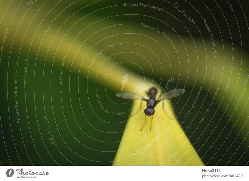 auf der Startpiste Umwelt Pflanze Tier Luft Sommer Schönes Wetter Gras Sträucher Blatt Garten Park Wiese Wald Fliege 1 fliegen klein gelb Landebahn Piste