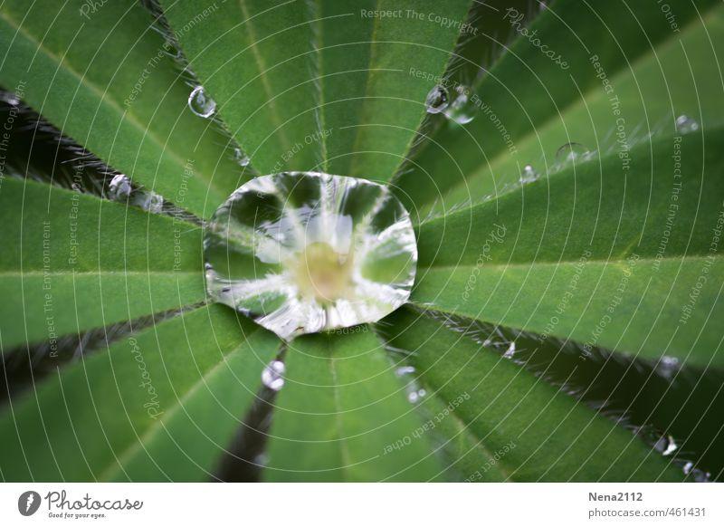 A kind of sun after the rain Natur grün Wasser Pflanze Sommer Blatt Umwelt Wiese Herbst Garten Regen Wetter Park Klima Schönes Wetter nass