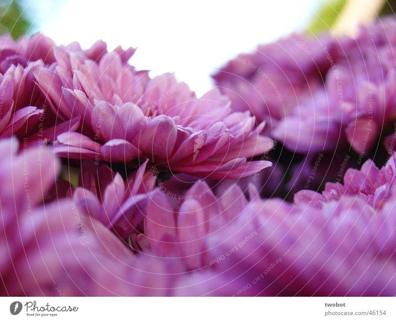 blumenstrauß schön Duft Sommer Sonne Garten Valentinstag Natur Frühling Wärme Pflanze Blume Blüte Topfpflanze Blumenstrauß nah grün violett weiß Blumentopf