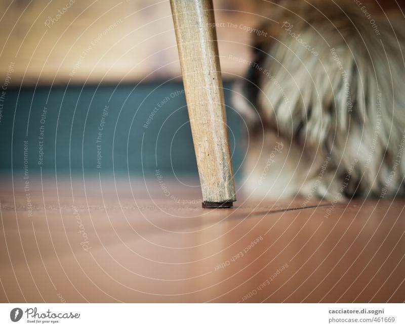 Stuhlbein Hund Erholung Einsamkeit Tier lustig Linie braun Angst niedlich einfach Bodenbelag Sicherheit Schutz Stuhl Fell Gelassenheit