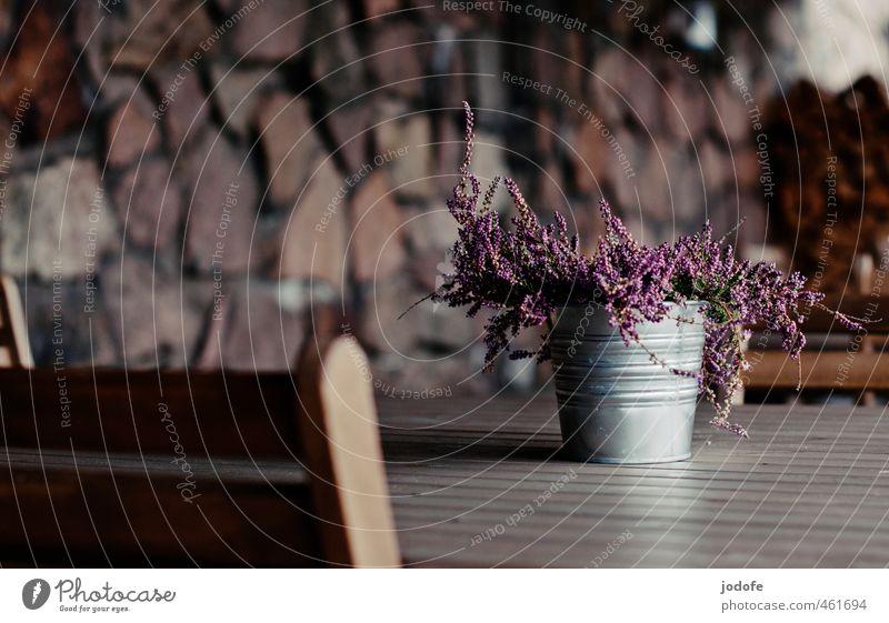 Sie werden platziert schön Pflanze Einsamkeit ruhig Blume Holz rosa Dekoration & Verzierung Tisch einfach violett Kot Restaurant Gast Brennholz Heidekrautgewächse