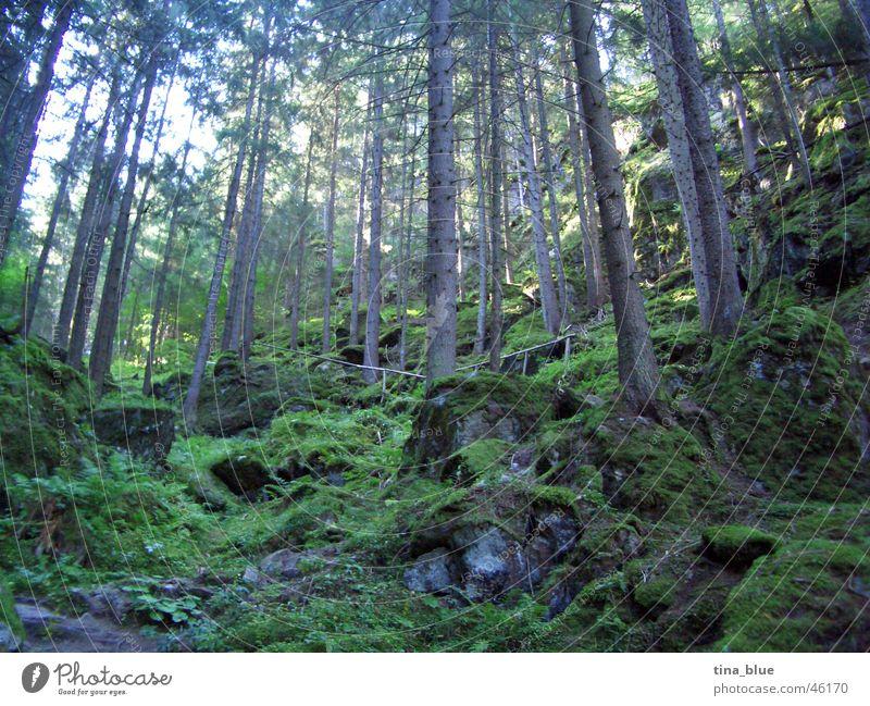 Märchenwald Ötztal Wald Europa Österreich Heimat Baum groß dünn grün Licht hell Sonnenstand Holzmehl unheimlich erdrückend dunkel Waldlichtung fantastisch