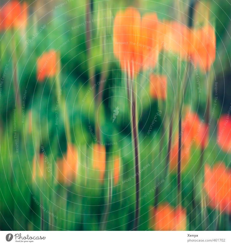 Hundert Hurrahurrahurra! Natur Landschaft Pflanze Blume Blüte Garten Bewegung Blühend leuchten Fröhlichkeit grün orange Freude Glück Lebensfreude Begeisterung