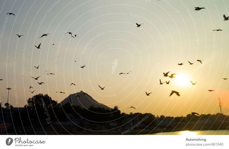 die Vögel Umwelt Natur Landschaft Luft Himmel Wolkenloser Himmel Horizont Sonne Sommer Schönes Wetter Pflanze Baum Berge u. Gebirge See Pushkar Rajasthan Indien