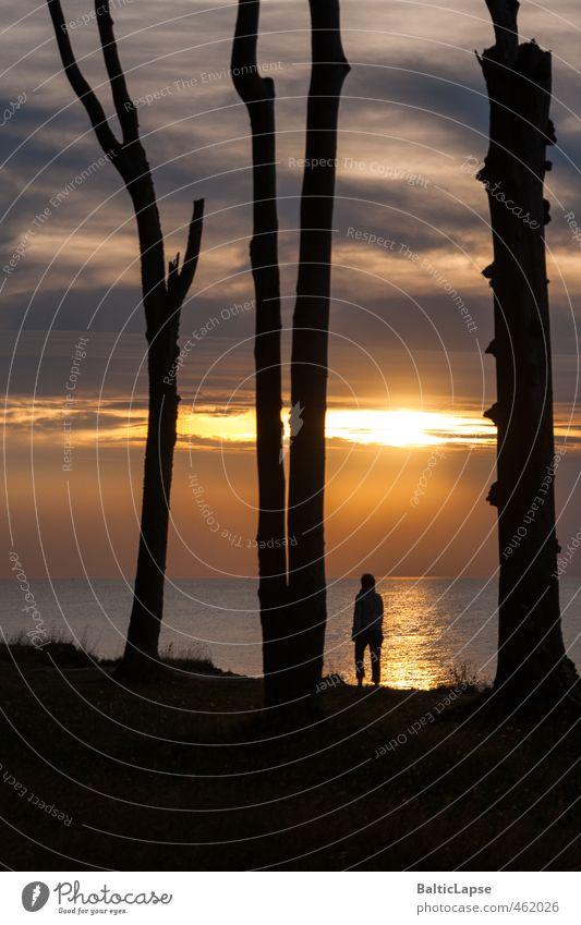 Sonnensucher Lifestyle Ferien & Urlaub & Reisen Tourismus Sommer Meer Landschaft Wolken Sonnenaufgang Sonnenuntergang Baum Wald Küste Ostsee gelb ruhig Erholung