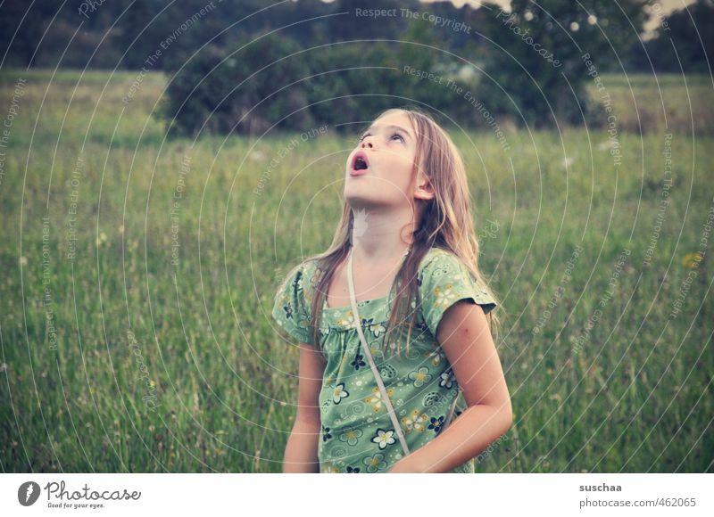 staunen Mensch Kind grün Pflanze Sommer Landschaft Mädchen Gesicht Auge Umwelt Wiese feminin Gras Haare & Frisuren Kopf natürlich