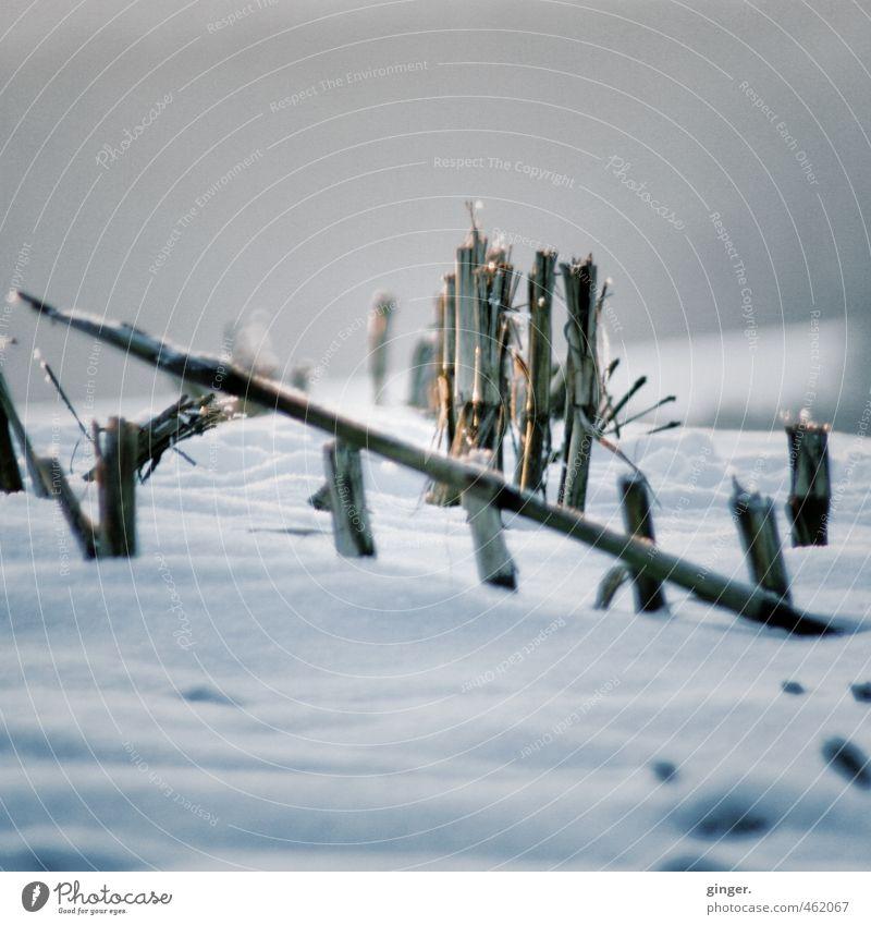 Heul doch! | Es kommt noch schlimmer Umwelt Natur Winter Klima Wetter Eis Frost Schnee Pflanze Feld kalt trocken Ernte Mais Maisfeld Linie Rest Landwirtschaft