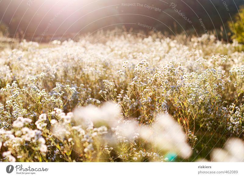 last summerday Umwelt Natur Landschaft Pflanze Sonne Sonnenaufgang Sonnenuntergang Sonnenlicht Sommer Herbst Schönes Wetter Blume Wildpflanze Garten Park Feld