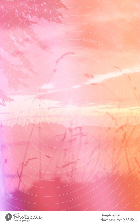 Müritz Nationalpark Umwelt Natur Landschaft Pflanze Himmel Wolken Sonnenlicht Sommer Baum Gras Sträucher Blatt Wildpflanze Wiese Feld verrückt Wärme wild rosa