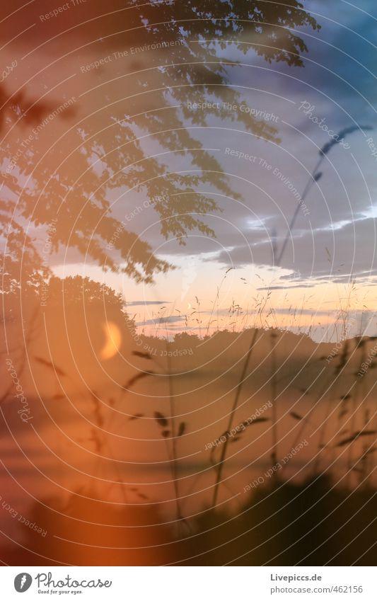 Müritz Nationalpark Umwelt Natur Landschaft Pflanze Himmel Wolken Mond Sommer Baum Gras Sträucher Blatt Wildpflanze Wiese Feld ruhig Idylle Lichtspiel Farbfoto