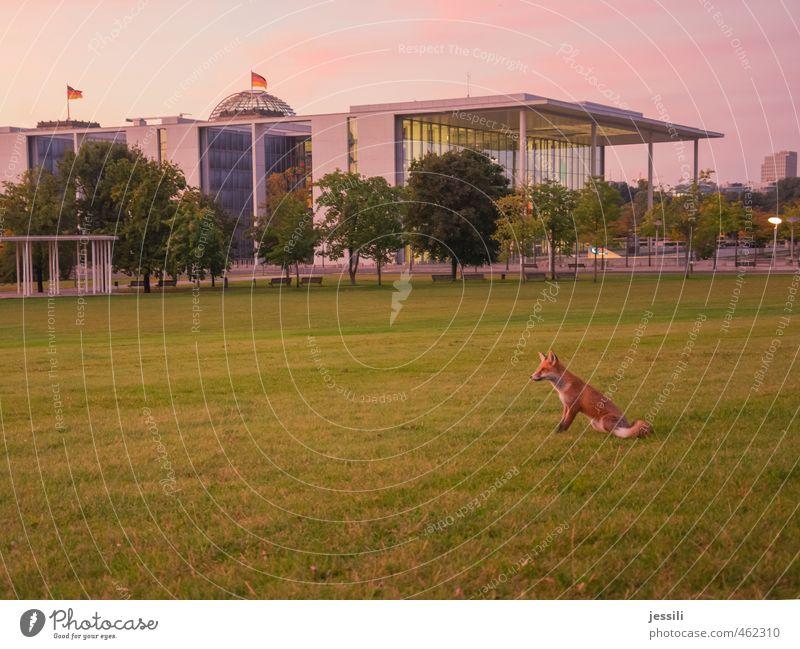 ... abwarten Tier Gebäude Berlin Stimmung Deutschland Wildtier Europa Perspektive Wandel & Veränderung Neugier Fell Fahne Mut Beratung Stadtzentrum Überraschung