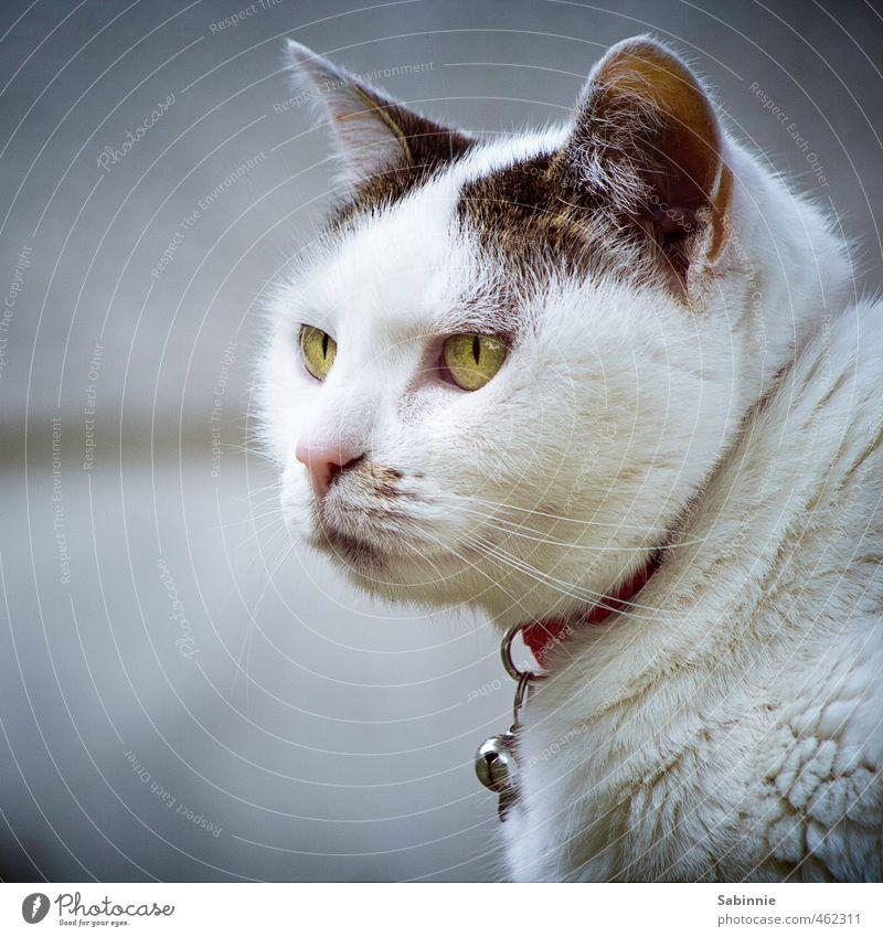 schwarzweissgrau | mit ein bisschen grün Tier Haustier Katze Tiergesicht Fell Katzenauge Schnurrhaar Ohr Halsband 1 niedlich weiß Glück Zufriedenheit