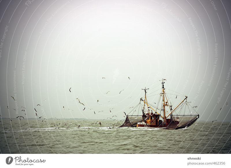 Alles im Lot Fischereiwirtschaft Urelemente Wasser Nordsee Meer Schifffahrt Fischerboot Krabbenkutter Vogel Möwe Schwarm Abenteuer Freiheit Farbfoto