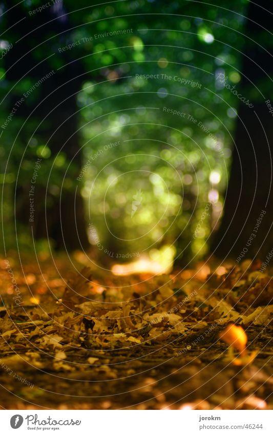 Waldweg im Herbst Blatt gelb Licht Hoffnung Sonne Wärme Wege & Pfade Verkehrswege