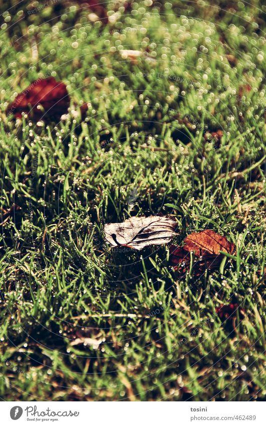 schon Herbst? Natur Blatt Park Wiese Garten schön braun grün Morgendämmerung Feuchtwiese Lichteffekt Farbfoto Außenaufnahme Detailaufnahme Menschenleer