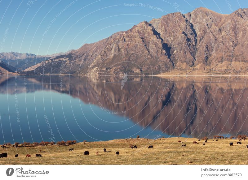 reflect Umwelt Natur Landschaft Wasser Herbst Schönes Wetter Gras Wiese Feld Hügel Felsen Alpen Berge u. Gebirge Gipfel Seeufer blau Reflexion & Spiegelung