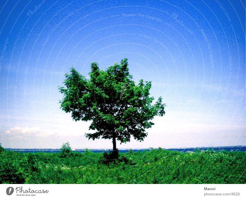 Baum Wasser Himmel