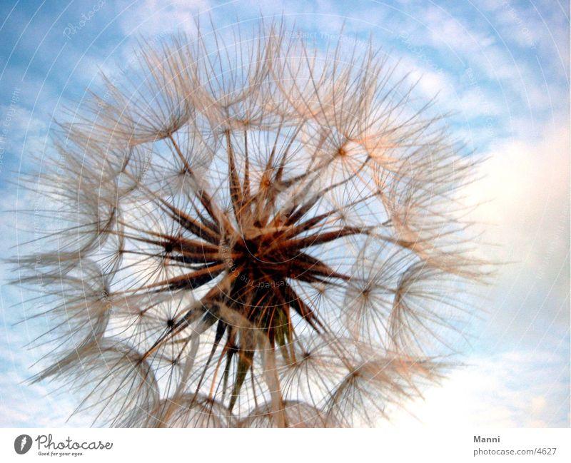 Blüte_1 Himmel Blume Pflanze