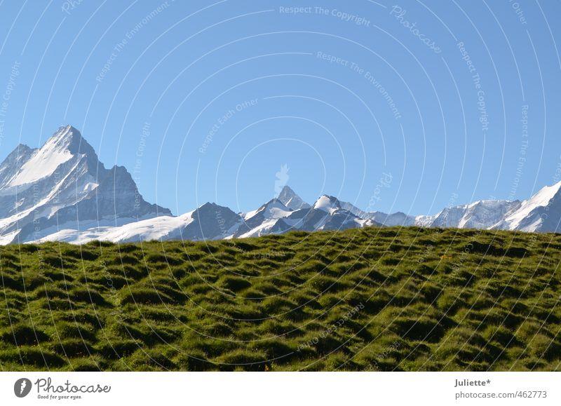Bergspitzen Natur Landschaft Erde Himmel Wolkenloser Himmel Sommer Wetter Schönes Wetter Schnee Wiese Hügel Alpen Berge u. Gebirge Gipfel Schneebedeckte Gipfel