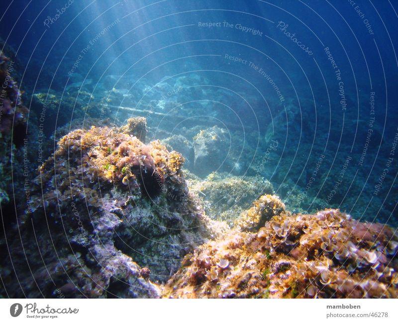 Rays of Light Meer Licht Unterwasseraufnahme Lichtstrahl blau Wasser Fisch Stein Felsen