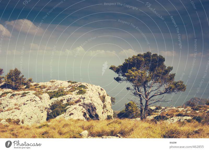 Himmel, Erde, Luft und Meer Ferien & Urlaub & Reisen Sommer Umwelt Natur Landschaft Wolken Horizont Wärme Baum Küste Bucht Fernweh Einsamkeit Idylle Mallorca