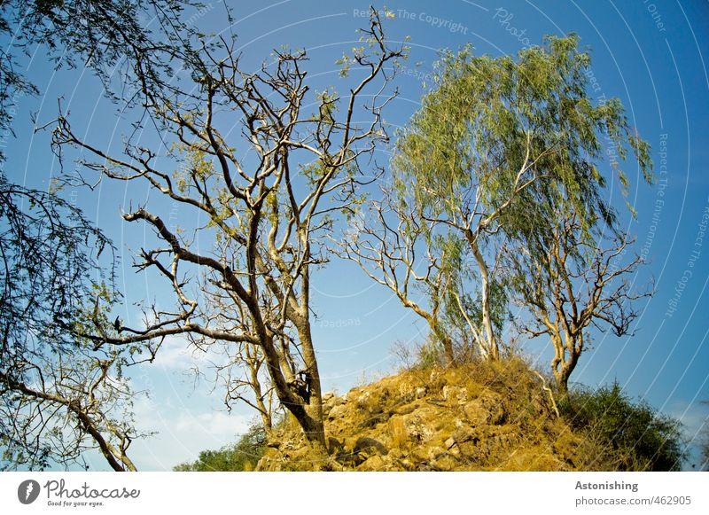 verzweigt Umwelt Natur Landschaft Pflanze Erde Sand Himmel Wolken Sommer Wetter Schönes Wetter Baum Gras Sträucher Blatt Hügel Gipfel Ranakpur Rajasthan Indien