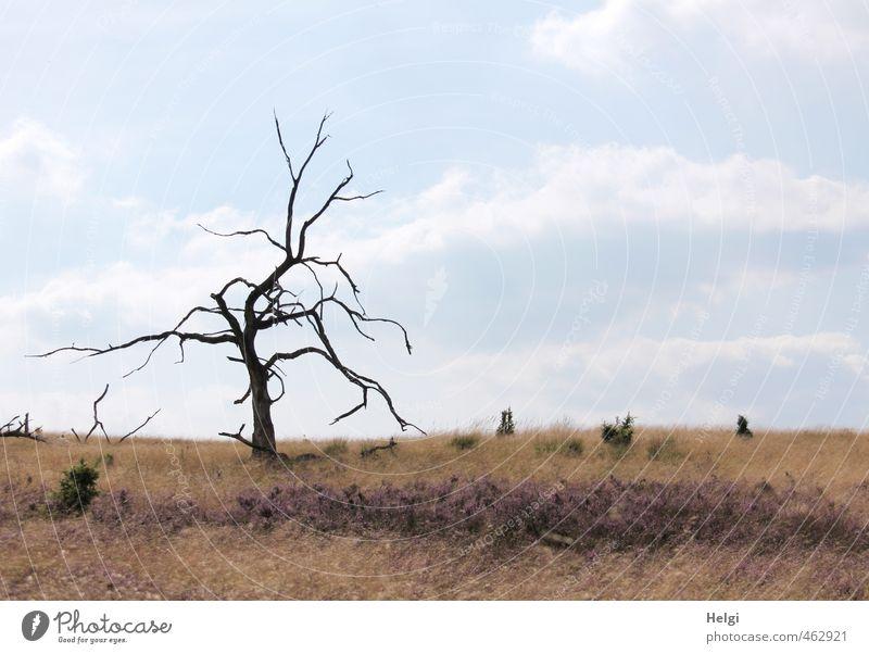 Einzelkämpfer... Himmel Natur blau alt Pflanze Baum ruhig Landschaft Blume Wolken Umwelt Leben Herbst Gras natürlich außergewöhnlich