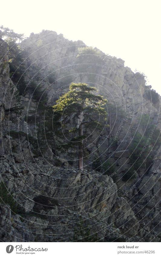 Der letzte Baum - Lichtwipfel bestrahlen grau grün Beleuchtung Baumkrone Berge u. Gebirge Sonne Stimmung Natur Wärme Freiheit