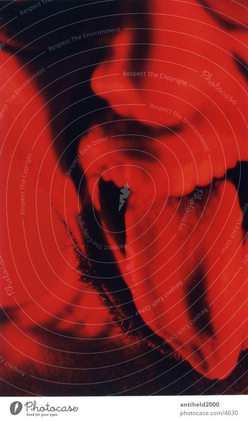 Zunge Mann Licht Hochformat rot Angriff Mensch Schatten