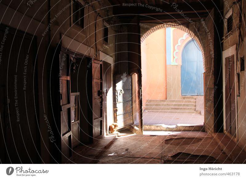 Marrakesh 1 Katze blau alt Stadt schön Erholung Tier Ferne Holz Denken Stein gehen braun orange Treppe Tür