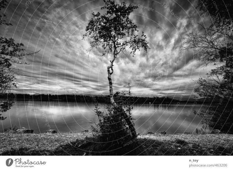 Black and White Natur weiß Sommer Baum Landschaft ruhig Wolken Ferne schwarz Wald Gefühle grau Schwimmen & Baden Denken Stimmung Regen