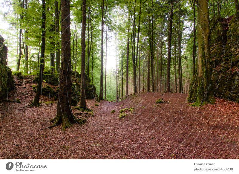 Franken - Wald Ausflug Sommer wandern Landschaft Baum Sträucher Blatt Laubbaum Hügel Felsen natürlich Originalität braun grün weiß ruhig Umwelt Höhle Farbfoto