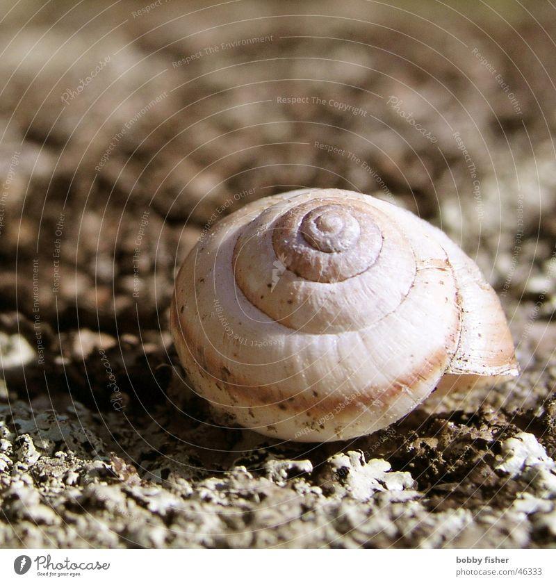 schnegge Tier Haus Einsamkeit Ernährung Frankreich Schnecke Natur Garten Makroaufnahme Bodenbelag Sand Stein
