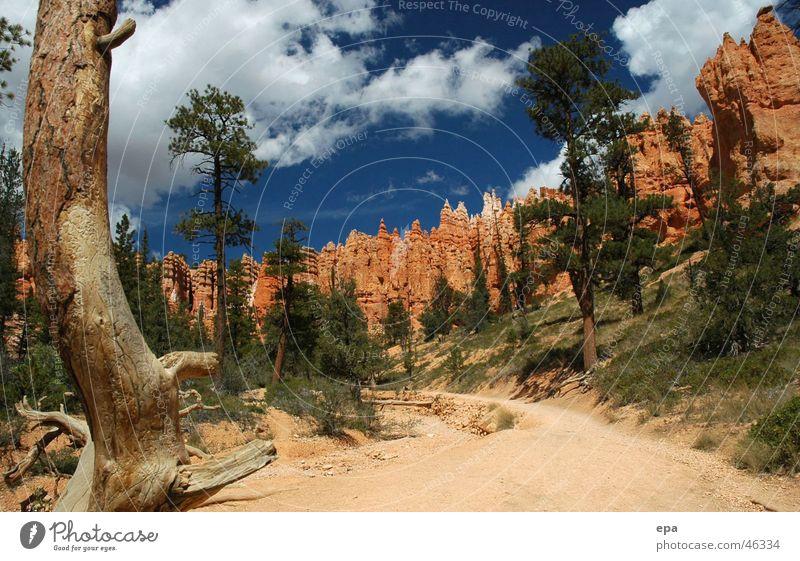 Bryce Canyon 1 Nationalpark Schlucht rot Ferien & Urlaub & Reisen Außenaufnahme USA blau Natur Wege & Pfade Stein Freiheit Sonne Kontrast Naturwunder Tag