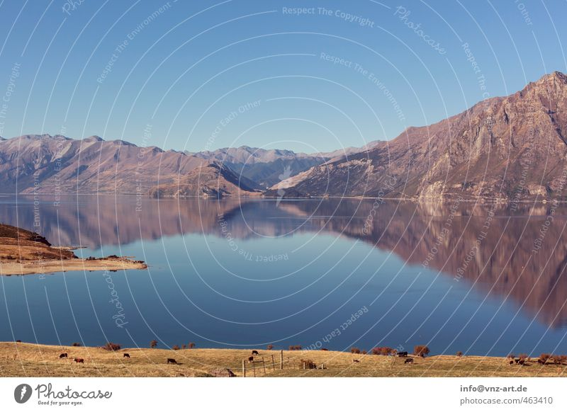 Am See Umwelt Natur Landschaft Pflanze Tier Wasser Himmel Wolkenloser Himmel Herbst Klima Wetter Schönes Wetter Wiese Hügel Felsen Alpen Berge u. Gebirge