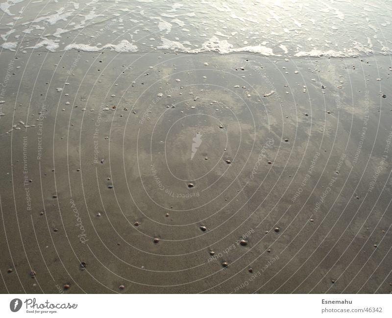 Muscheln & Meer Wasser weiß Strand dunkel Sand hell braun Wellen Schaum