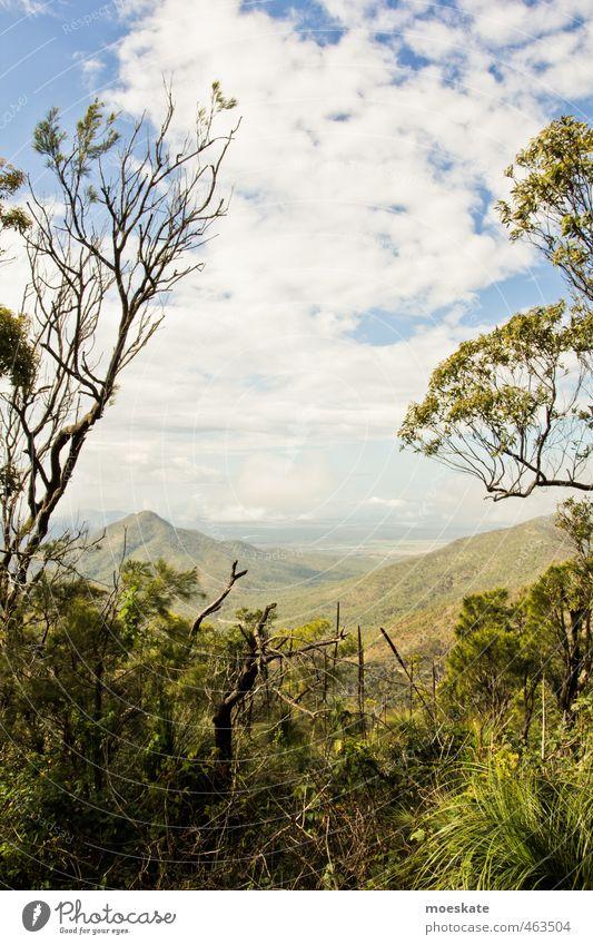 Grüne Aussicht Natur Landschaft Pflanze Himmel Wolken Sommer Baum Grünpflanze exotisch Wald Urwald Hügel Berge u. Gebirge natürlich Australien Ferne
